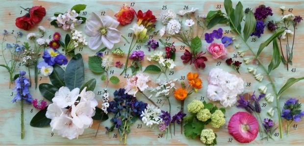 Biodiversity in bloom, in my garden today.